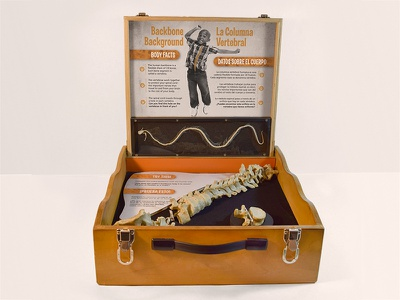 Backbone Exhibit science museum exhibit backbone skeleton biology education anatomy
