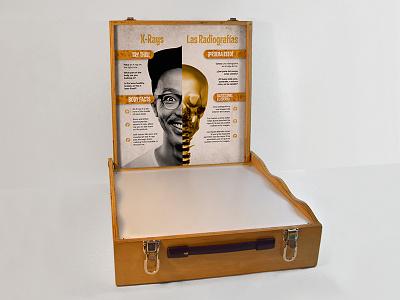 X-Ray Light Box science museum exhibit backbone skeleton biology education anatomy