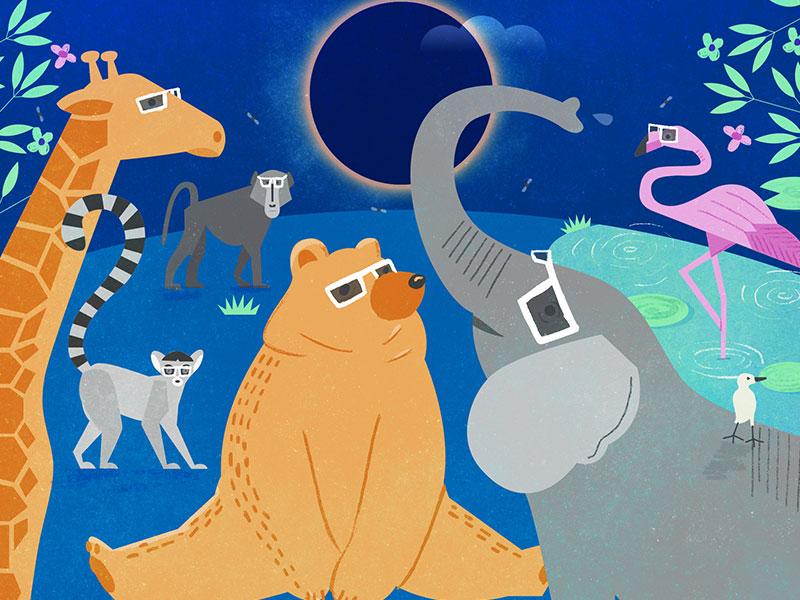 Animals react to the eclipse editorial illustration illustration flamingo monkey giraffe elephant bear animals eclipse