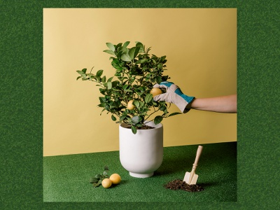 Plant Mom. set design still life focus lab styling photography