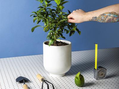 Re: Design Dads via citrus set design still life focus lab styling photography